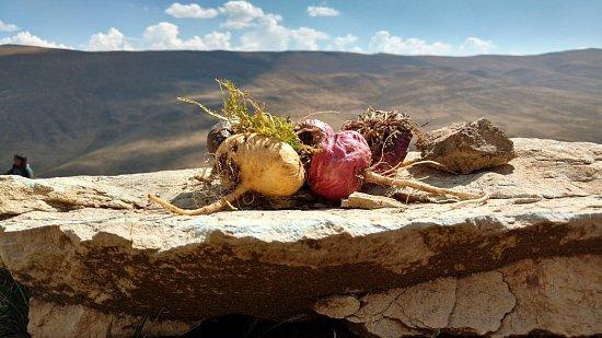 Мака перуанская: как принимать, польза и вред, противопоказания